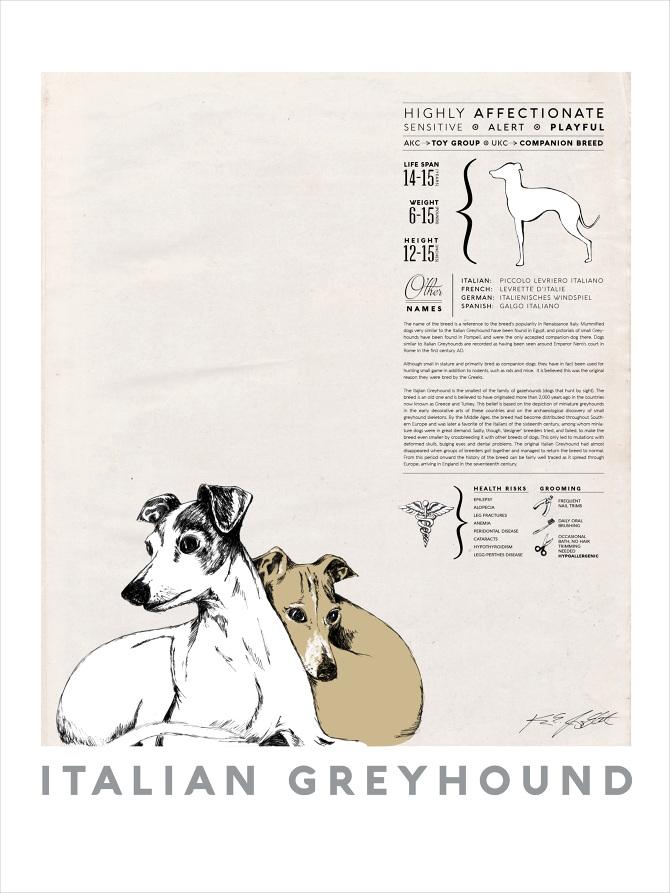 best in show italian greyhound poster karyn jimenez elliott